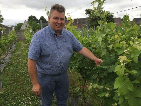 Foto wijndomein Carrijn producent