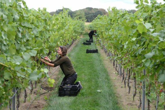 Foto producent wijndomein Vandersteene