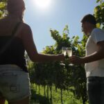 Foto product wijndomein Piro