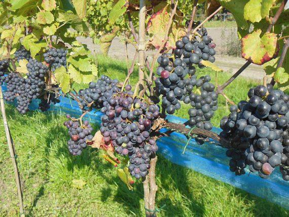 Foto wijnen de Barra product