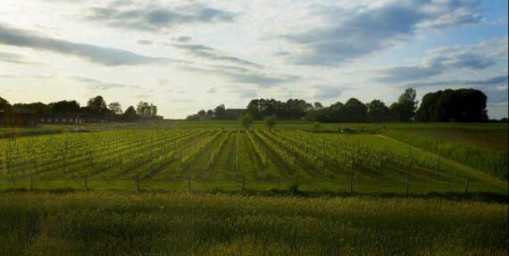 Foto wijngaard Het Verhaal LZ