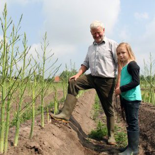Foto asperges Andries producent