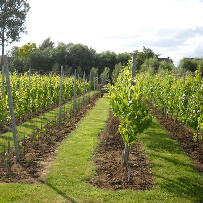 Foto wijndomein De 3 Fonteinen producent