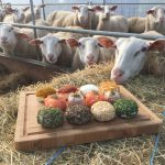 Foto schapenmelkerij Bosschelle product